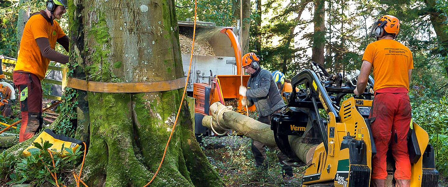 Experts in management of large trees